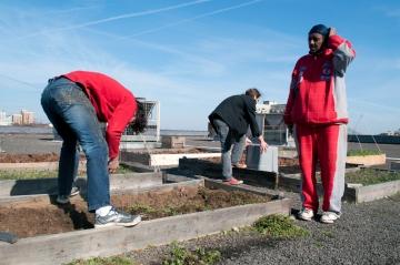 Rooftop gardeners