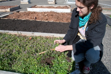 Cultivating raised garden beds