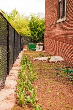 Community gardening around elementary school in Vine City